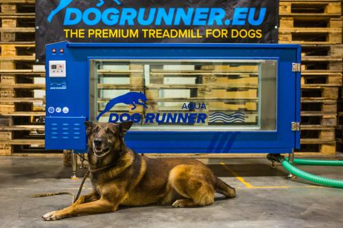 Design Voor Honden : Luxe kwaliteit en design voor je hond the dog musthaves